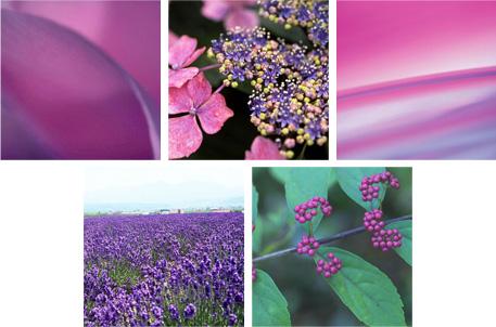 紫のイメージ