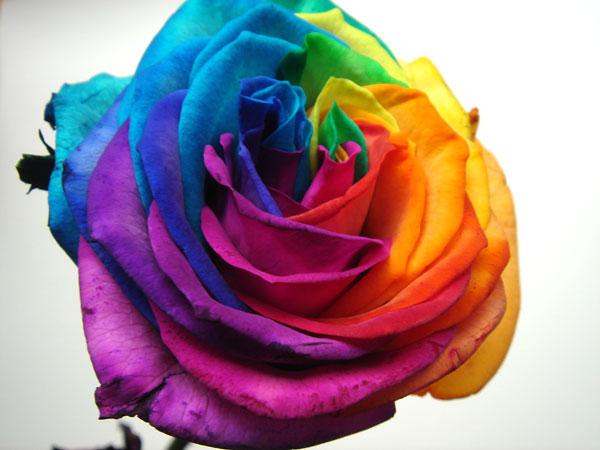 レインボーローズの花束で結婚式を華やか ...